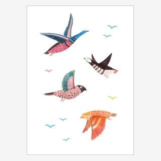 Noull Grußkarte Postkarte Wildvögel